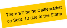 The Cattle Market will be closed on September 12 2017 due to the Storm